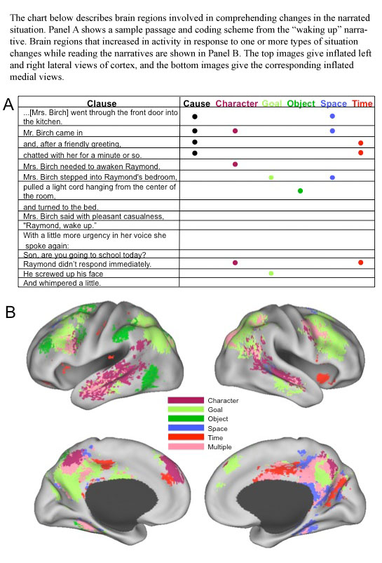 D'après les scans du cerveau, les lecteurs construisent une simulation à partir de situations narrative